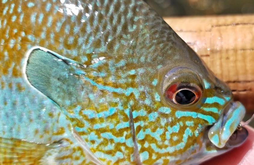 aaron_reed_presentation_fish