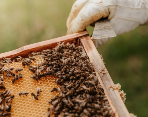 anchored_outdoors_beekeeping_homesteading