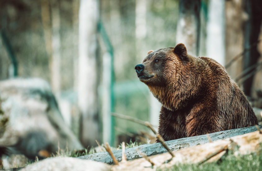 bear_course