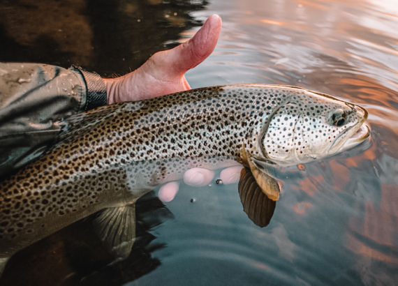 learn_to_fish_dry_flies
