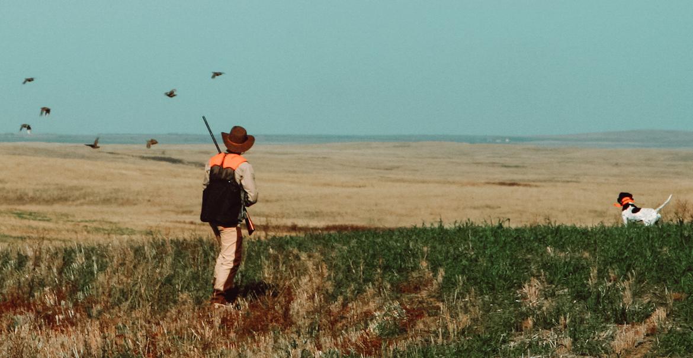 jim_mclennan_hunting_gamebirds