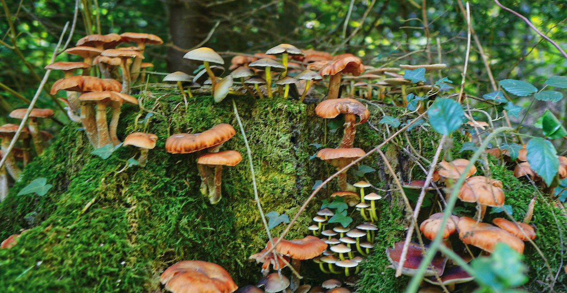 learning_how_to_forage_mushrooms