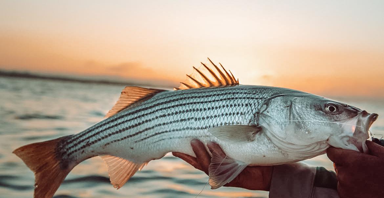 Striper fishing guide association
