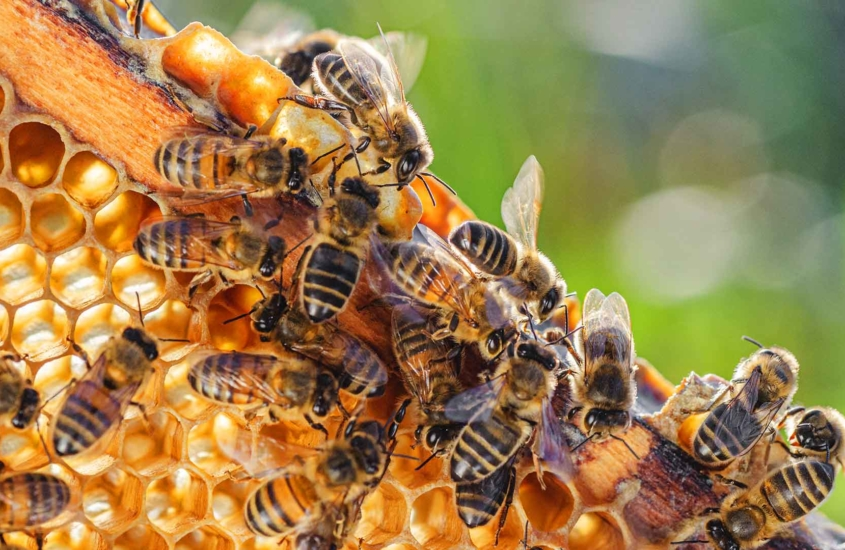 intro_to_beekeeping