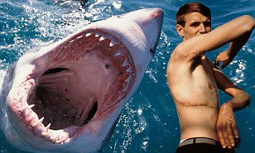 Rodney Fox on great white sharks